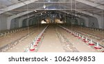 Modern Poultry Farm For The...