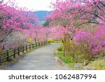 Trails Of Pink Peach Blossoms...