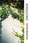 green creeper plant on concrete ...   Shutterstock . vector #1062555620