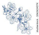 almond blossom branch isolated...   Shutterstock .eps vector #1062624374