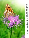Small photo of butterfly Fabriciana aglaia sitting on a flower