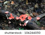 Mushroom Champagne - stock photo
