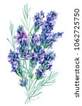watercolor bouquet lavender... | Shutterstock . vector #1062725750