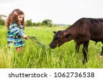 baby girl feed the calf by... | Shutterstock . vector #1062736538