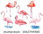 set beautiful birds  pink... | Shutterstock . vector #1062744500