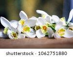 spring snowdrop flowers on... | Shutterstock . vector #1062751880
