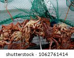 Landscape picture of a crab pot ...
