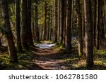 forest pathway surrounded by...   Shutterstock . vector #1062781580