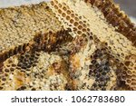 Small photo of Useful, natural product with apiaries, yellow honey in honeycombs. A remedy for colds, raises immunity. Hexahedral cells are filled with honey.