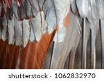 background of chicken feathers | Shutterstock . vector #1062832970