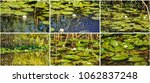 white water lilies in the... | Shutterstock . vector #1062837248