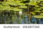 white water lilies in the... | Shutterstock . vector #1062837260