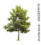 isolated tree on white... | Shutterstock . vector #1062859970