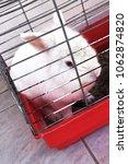 Small photo of white albino rabbit in a cage