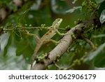 lizard in the garden   Shutterstock . vector #1062906179