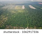 aerial view of green palm oil... | Shutterstock . vector #1062917336