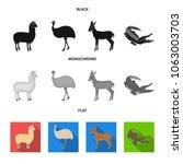 lama  ostrich emu  young... | Shutterstock .eps vector #1063003703