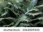 green fern at the forest ... | Shutterstock . vector #1063009343