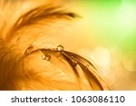 water drops on a feather of... | Shutterstock . vector #1063086110