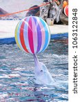 a pink dolphin playing with a... | Shutterstock . vector #1063122848