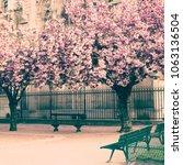 cherry blossoms in paris in...   Shutterstock . vector #1063136504