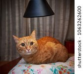 Small photo of Cute discouraged red cat lying under lamp