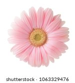 Light Pink Gerbera Flower...