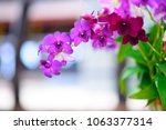 beautiful purple orchid in... | Shutterstock . vector #1063377314