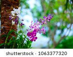 beautiful purple orchid in... | Shutterstock . vector #1063377320