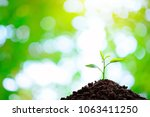 the seedling are growing in the ... | Shutterstock . vector #1063411250