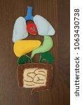 colorful human body anatomy... | Shutterstock . vector #1063430738