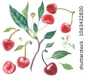 set of cherry on branch with...   Shutterstock . vector #1063432820