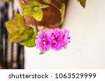 flower pot with pink geraniums... | Shutterstock . vector #1063529999