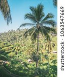 rice terrace and palms at early ... | Shutterstock . vector #1063547669