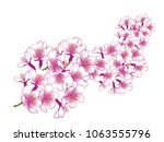 hand drawn cherry blossom... | Shutterstock .eps vector #1063555796