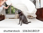 funny photo of dog sitting on... | Shutterstock . vector #1063618019