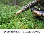 bilberry picking berries | Shutterstock . vector #1063730999