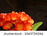kaffir lily close up | Shutterstock . vector #1063734266