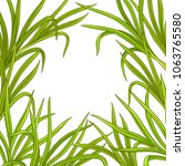 lemongrass  plant vector frame | Shutterstock .eps vector #1063765580