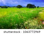 uncultivated green field with... | Shutterstock . vector #1063772969