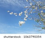 white blossoms and blue sky | Shutterstock . vector #1063790354