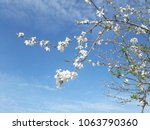 white blossoms and blue sky | Shutterstock . vector #1063790360