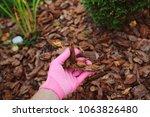 mulching garden beds with pine... | Shutterstock . vector #1063826480
