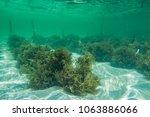 underwater photography. sea... | Shutterstock . vector #1063886066