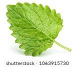 green lemon balm leaf  melissa... | Shutterstock . vector #1063915730
