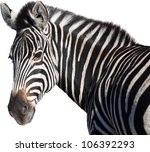 Head Of A Zebra Isolated From...