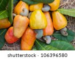 cashew apples with leaves | Shutterstock . vector #106396580