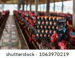 raw eggs from farms waiting for ... | Shutterstock . vector #1063970219