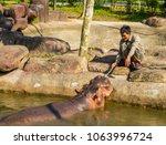 phu quoc  vietnam   february 12 ... | Shutterstock . vector #1063996724