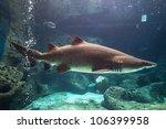 Shark Underwater In Natural...